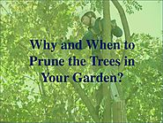 Why and When to Prune the Trees in Your Garden?