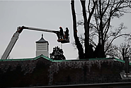 Why should you hire tree surgery service?