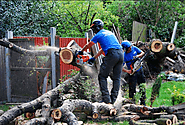 Benefits of hiring professional tree surgery services