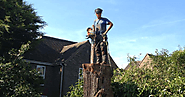 Tree and Garden Care: 7 Reasons one must go for tree stump removal service