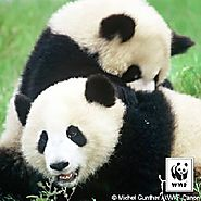 Raise Money to Honor a Loved One - WWF Panda Nation | (Create Memorial Fundraising Page)