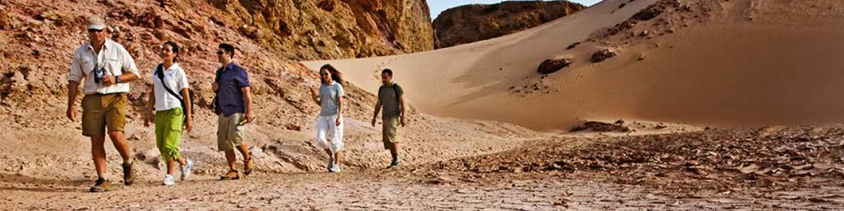 Headline for Top activities that you can do to explore and get closer with nature in Sir Bani Yas Island