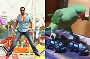 Ajay Devgan's cracking stunt copies this parrot, watch viral video
