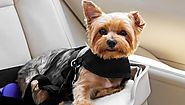 Different Types Of Dog Harnesses That You Can Buy