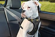 Why choose harness instead of the collar for your dog?