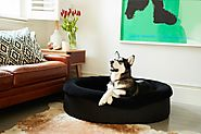 Benefits of buying luxury dog beds in Australia By Ryan Holman - Alchetron