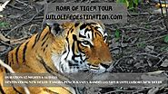 Roar Of Tiger Tour | Wildlife Tour Packages