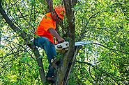 Five Must-Have Tools Every Tree Removal Professional Should Carry