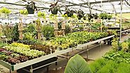 5 Reminders Before Looking For a Plant at Plant Nurseries In Lexington, Kentucky