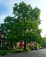 Affordable Kentucky Tree Service - Ensuring Health and Safety of Your Trees