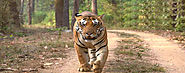 7 Days Golden Triangle Tour with Ranthambore | Golden Triangle Tour With Ranthambore - Culture India Trip