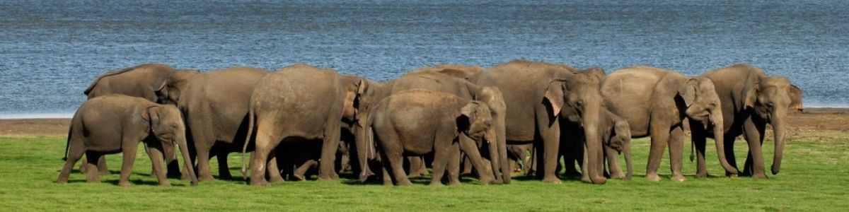 Headline for 5 amazing animals you can see in Sri Lanka- Explore the wildlife