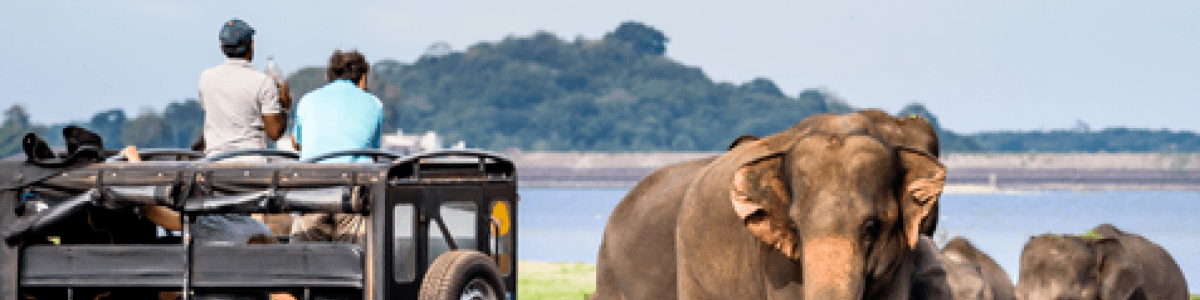 Headline for Things to see and do in Yala National Park - A wildlife adventure awaits the nature enthusiast in you