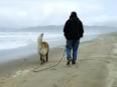 Beaches For You and Your Dog | Park & Recreation