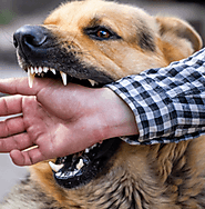 Santa Rosa Dog Bite Attorney | Dog Bite Law Firm in Sonoma County - newbylawoffice.com