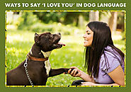 Website at https://www.bestvetcare.com/blog/ways-to-say-i-love-you-in-dog-language/