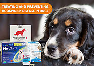 How do you protect your dogs from hookworm?
