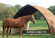 Horse Care 101: How To Take Care Of Your Horse