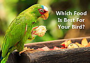 Which Food Is Best For Your Bird? Dietary habits of different birds