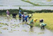 A quick peek on the Rice Development in Africa