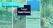 8 Breathtaking Forests in India for Nature Lovers - TripBeam Blog