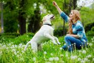 Treat Your Dog to Training - Learning Tricks & Having Fun