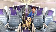 Safe And Comfy Flight For Your Pet