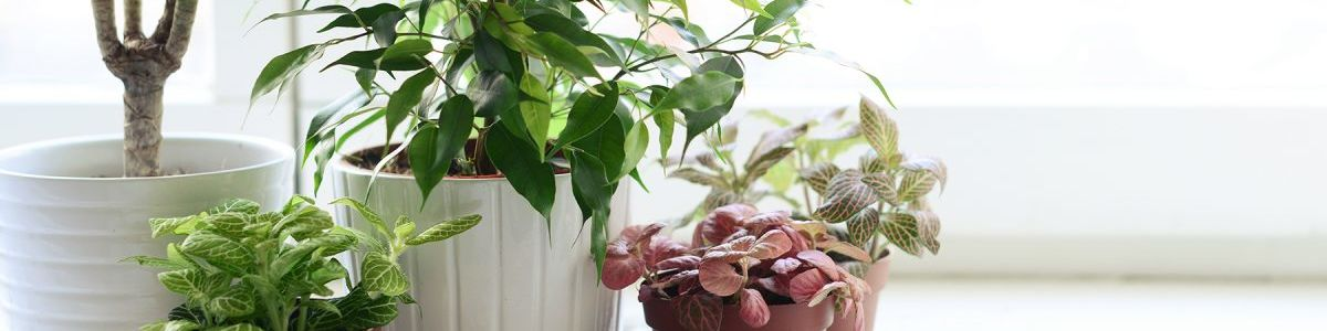 Headline for Indoor Plants that will improve your Offices Environment: