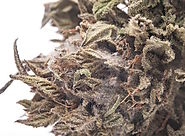 Beware Of The Moldy Weed When You Buy Weed Online – Here Is How!