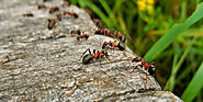 Dealing with pests the correct way | Pest Control Toronto
