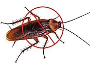 How To Prevent Cockroaches from Entering Your Home?