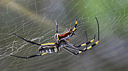 Simple and Natural Ways of Spider Removal |