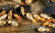 Some Effective Ways to Get Rid of Termites