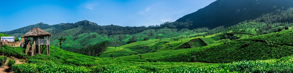 Headline for 8 highlights of Sri Lanka's Hill Country – The birthplace of Sri Lankan tea