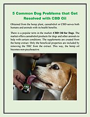5 Common Dog Problems that Get Resolved with CBD Oil