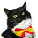 CatAcademy - Learn languages from cats