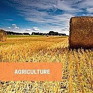 Agriculture Industry Research Reports - Feed Industry Report - Knowledge Sourcing Intelligence