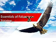 Essentials of Falconry Training by Falconry Arabia - Issuu