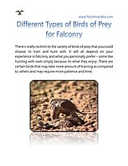 Different Types of Birds of Prey for Falconry