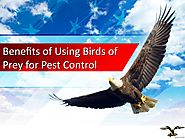 Benefits of Using Birds of Prey for Pest Control