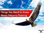 Things You Need to Know About Falconry Training