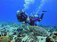 Scuba Diving Playa Del Carmen For Beginners