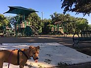 Blossom Park - Community Park In San Antonio - PLACES FOR PUPS