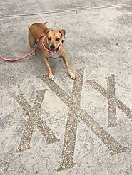 Where Am I? X Marks the Spot - PLACES FOR PUPS