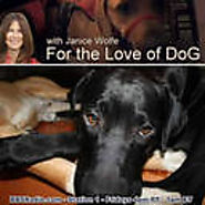 For The Love Of Dog With Janice Wolfe podcast