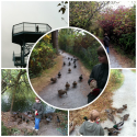 THE GEORGE C. REIFEL MIGRATORY BIRD SANCTUARY - My Awesome Blog by Adam