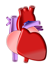 Best Cardiologist and Heart Specialist Hospital in Pune | Noble Hospital