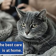 Here Is Why You Should Consider Home Pet Euthanasia