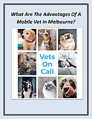 What Are The Advantages Of A Mobile Vet In Melbourne
