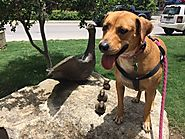 Why Visit The Dog Friendly Riverwalk In Boerne? - PLACES FOR PUPS
